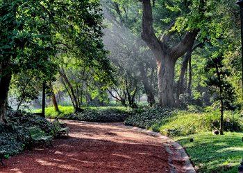 Una propuesta turística verde en el medio de la Ciudad de Buenos Aires