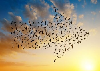 Silhouette,Of,Birds,Flying,In,Arrow,Formation,At,Sunset,Sky.